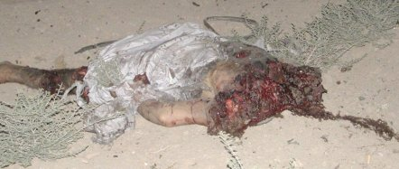 iraqbeheading2.jpg